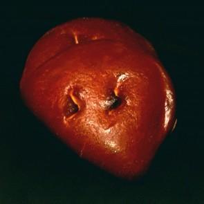 Gosettes aux abricots
